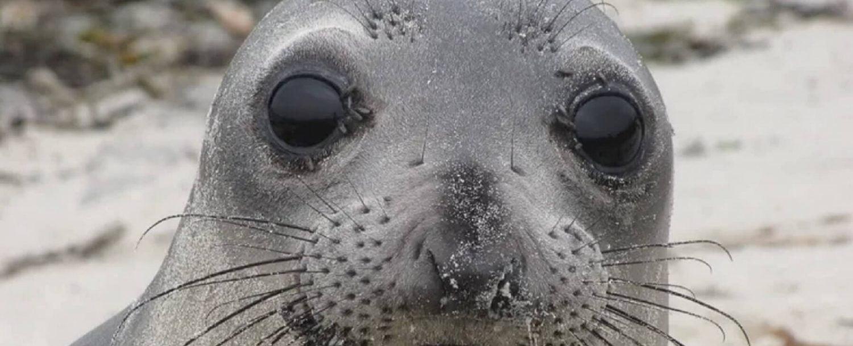 Seal staring