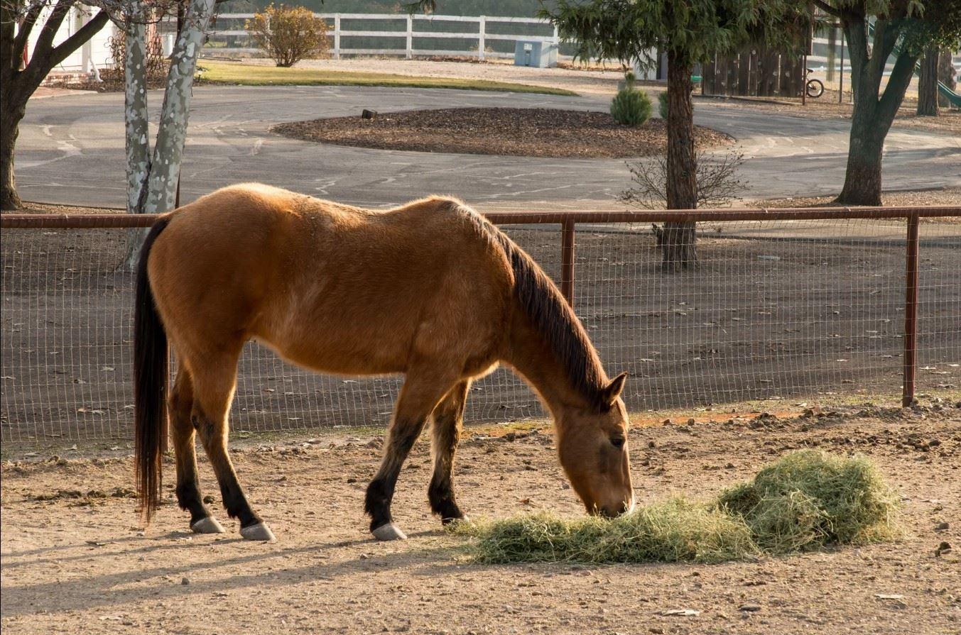 Frontier Hideaway - Horse Grazing