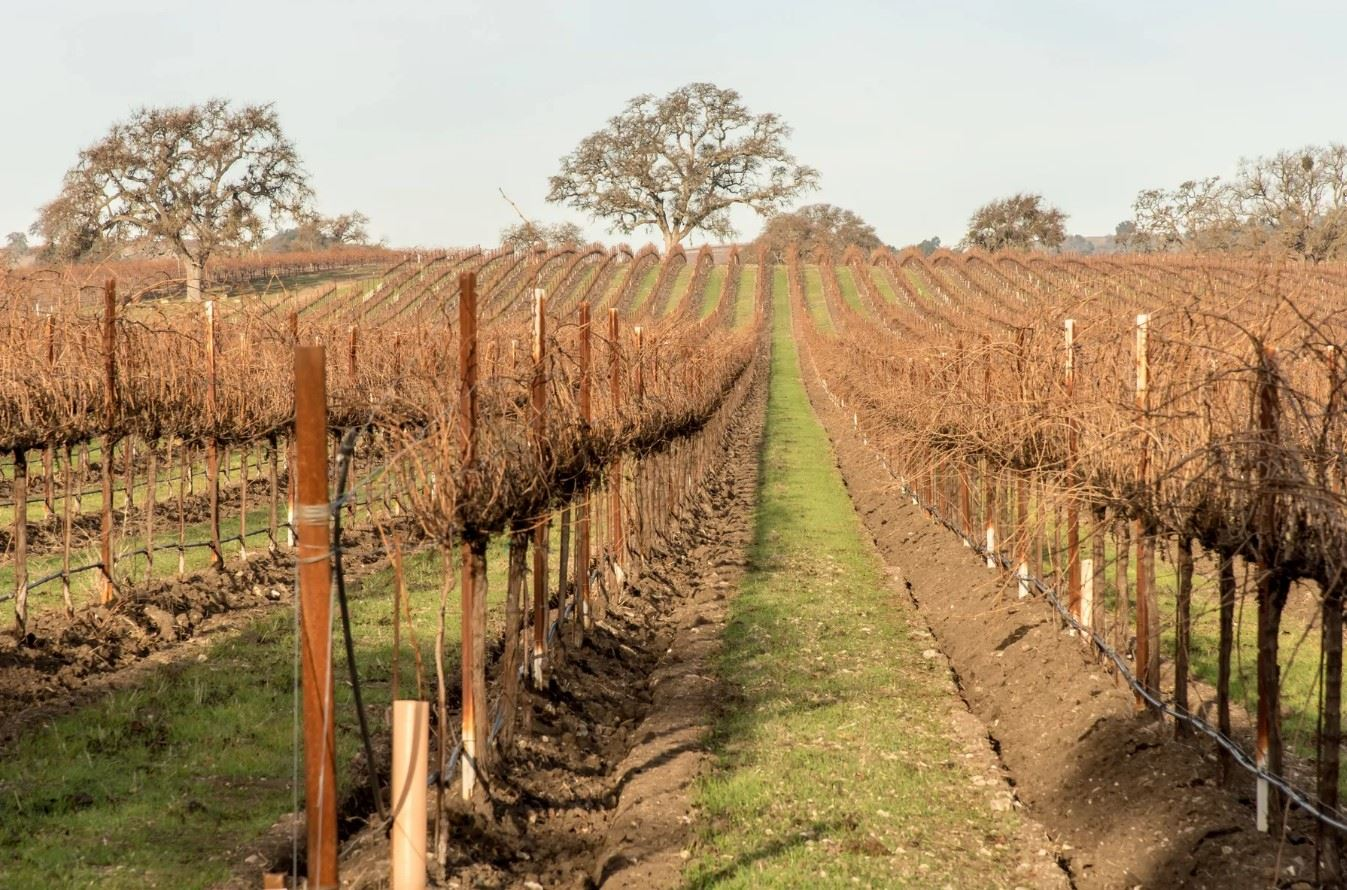 Frontier Hideaway - View of Vineyard Setup