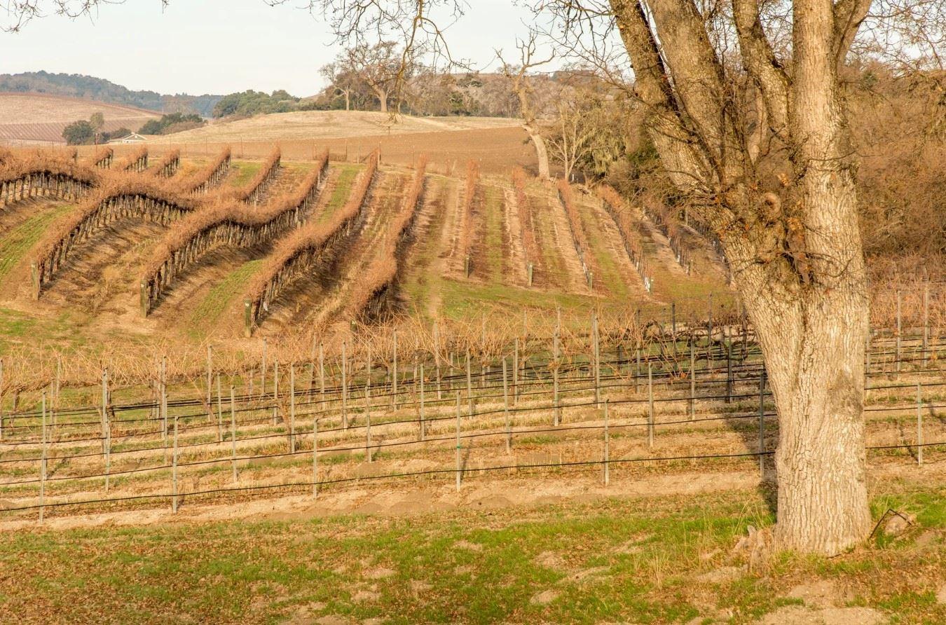 Frontier Hideaway - Vineyard Hills