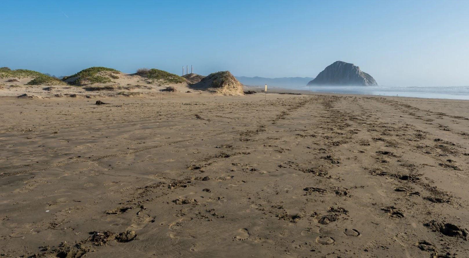 Morro Bay Rock Revival - Exterior - Local Beach Scene