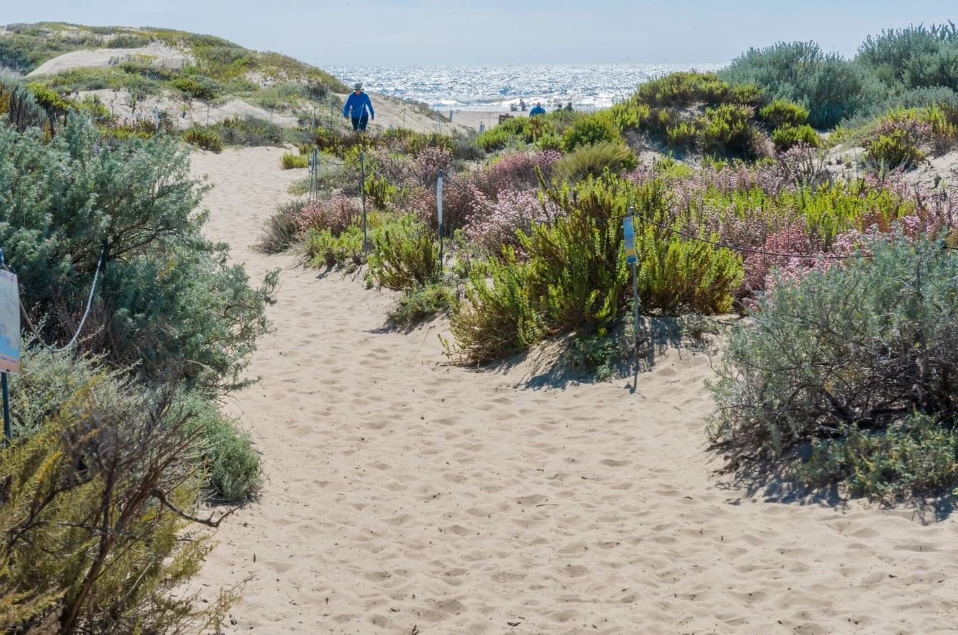 Morro Bay Rock Revival - Exterior - Shot of local beach from the dune path